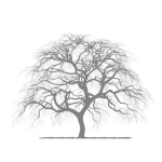 Fidesa-Tree-Transparent-Background
